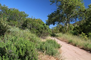 029-Shady-Canyon-Golf-Course-Hole-07