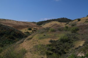 135-Shady-Canyon-Open-Space