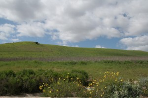 Quail-Hill-Irvine-Open-Space_05