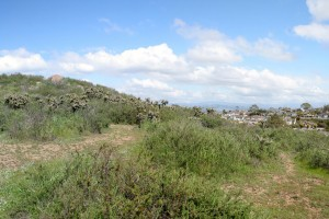 Turtle-Rock-Irvine-Trails-and-Vistas_20